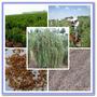 Goji Berry Nq No. 7 100 Sementes Importadas Melhor Do Mundo