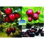 Coleção De Frutíferas (kit Com 5 Mudas De Frutas Vermelhas)
