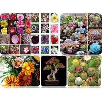 105 Sementes De Flores Ornamentais - Orquídea - Frete Grátis