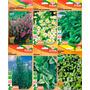 Kit 6 Tipos Sementes Tempero Ervas Orégano Alecrim Hortelã