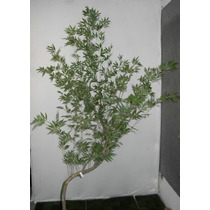 Bambu Mosso Artificial