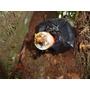 Isca Pet Para Captura De Enxames Abelhas Nativas Sem Ferrão