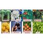 Kit Com 8 Tipos De Sementes De Mini Legumes 160 Sementes