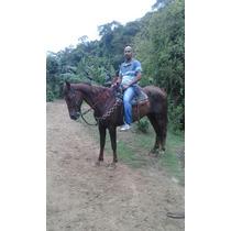 Cavalo Marchador Top E Manso. Abaixei Pra Vender