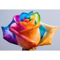 50 Sementes Rosa Arco Iris (coloridas)- Raras- Frete Gratis