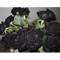 Pacote Com 10 Sementes De Rosas Preta Negra + Frete Rápido