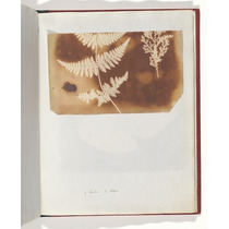 Poster (46 X 61 Cm) 1. Felce. 2. Alga William Henry Fox