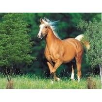 Formula Para Ração De Cavalo