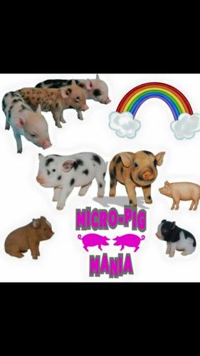 Mini Porco Mine Pig Rosinha E Pintadinhos