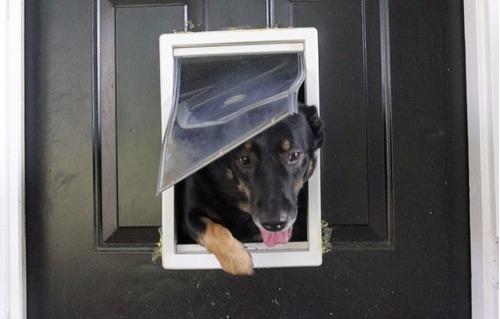 Porta De Passagem Para Cães E Gatos