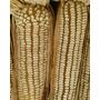 Milho Branco Colonial -100 Sementes