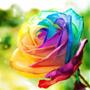 50 Sementes De Rosa Arco-iris Raras Sementes Barata