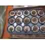 Minicactus - 10 Plantas Por R$ 20,00
