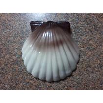 Concha Shell Para Pendurar Na Parede