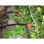 50 Micro Aspersor Irrigador Irrigação Jardins Canteiro Vasos