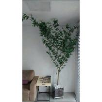 Bambu Mossô Artificial 230cm