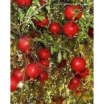 Sem. Romã Gig@nte Turkey Fruta P/ Mudas-compre 1 Leve 2