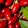 Mudas De Fruta Do Milagre - Produz Em 1 Ano