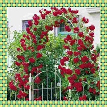 100 Sementes Rosas Trepadeiras 24 Cores Mix + Frete + Brinde