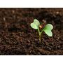 Terra Vegetal Adubada 10kg Para Plantas, Jardins E Vasos