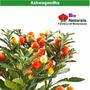 Pos Treino Suplemento 100% Natural 7 Ervas -270 Capsula -241