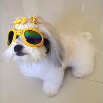 Oculos De Sol Para Cães Com Proteçao Uv