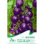 10 Sementes De Tomate Roxo Purple Blue Tomato Mini Tomate