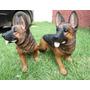 Cachorro Pastor Alemão Em Resina Para Decoração, Rottweiler