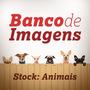Banco De Imagens - Stock Animais [hd - Alta Resolução]