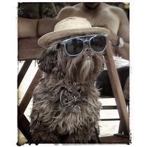 Chapéu Para Cães