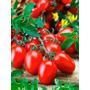 Tomate Cereja Roma Super Red Sementes Para Mudas