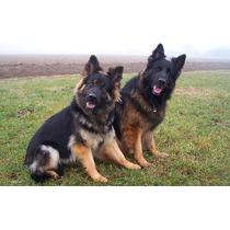 Adestramento Cachorro Filhote Ou Adulto Ebook Frete Gratis