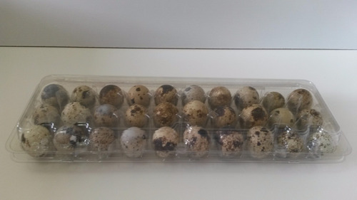 Embalagem Plástica Para 30 Ovos De Codorna 50 Unid.