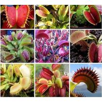 10 Sementes Planta Carnivora+brinde,arvores Jardin Flores