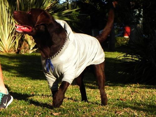 Moleton Moletom Roupa Labrador /  Frete Grátis