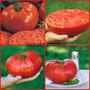 100 Sementes Do Tomate Gaucho Gigante Com Frete Gratuito
