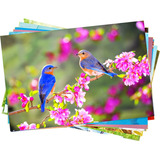 10 Fls Papel Foto Paper Glossy Brilhante 180g A6 10x15