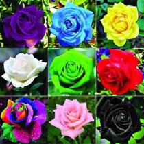 d9831430e Busca Sementes rosa deserto com os melhores preços do Brasil ...
