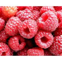 Framboesa Gigante Red Raspberry Sementes Flor Para Mudas