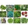630 Sementes Kit Verduras * Legumes * 18 Espécies + Brinde
