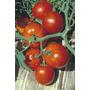 85 Sementes De Tomate Rasteiro Rio Grande - Tomate Salada