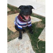 Staffordshire Bull Terrier - Filhote Staffbull