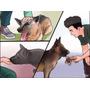 Rottweiler - Guia De Adestramento Para Cães