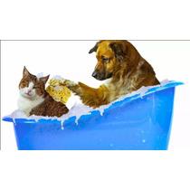 Software De Gestão De Pet Shop
