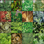 Kit 12 Pcts De Sementes De Hortaliças Folhosas Ervas Mudas