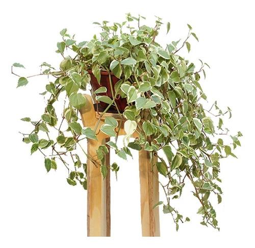 Suporte Para Vaso De Plantas - Grande (70cm)