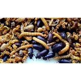Start Inicial Besouros Do Amendoim Comida Para Aves, Peixes!