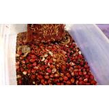 Início Da Colônia De Besouros Do Amendoim! Comida Para Peixe