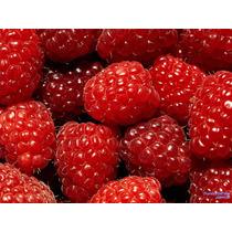10 Sementes De Framboesa Vermelha + Frete Grátis