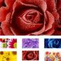 Adesivo Decorativo De Parede Paineis Com Imagens De Flores